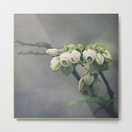 Blueberry Blossoms Metal Print
