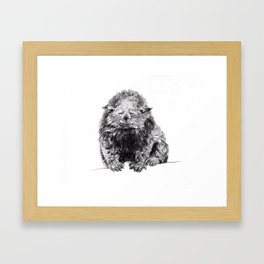 Fussy Bear Cat Framed Art Print