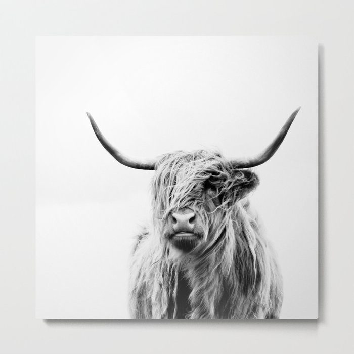 portrait of a highland cow Metal Print