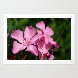 Pink Oleander Blossom Art Print