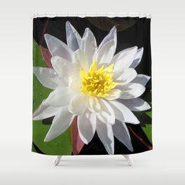 Watercolor Water Plant, Fragrant Water Lily 03, Kejimkujik, Nova Scotia, Canada Shower Curtain