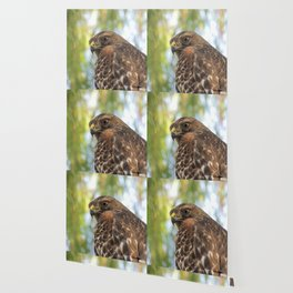 Young Red-Shouldered Hawk in a Desert Willow Wallpaper