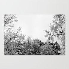 Snow Branches Canvas Print