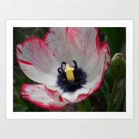 tulip Art Prints featuring Tulip by Vitta