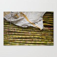 sugar cane Canvas Print