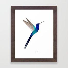Swallow-tailed Hummingbird Framed Art Print