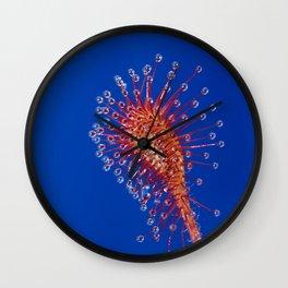 Sundew Wall Clock