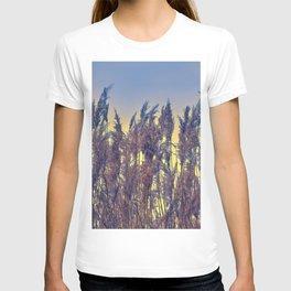 reed and sunset at lake T-shirt
