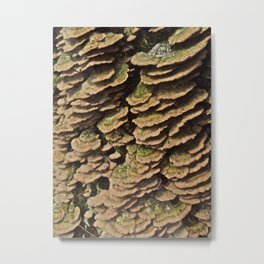 shelf fungus Metal Print
