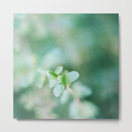 Leaves in summer Metal Print