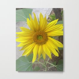 Sunflower, Yes! Metal Print