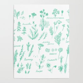 Aromatic herbs Poster