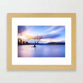 Wanaka Tree Framed Art Print