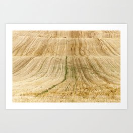 collection of rye crops Art Print