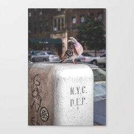NYC Pigeon Canvas Print
