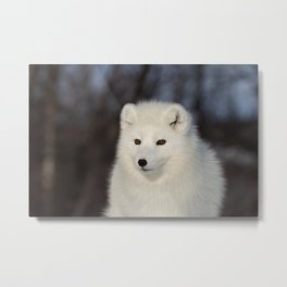 Polar fox Metal Print