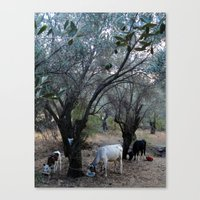 cows Canvas Prints featuring Cows by aeolia