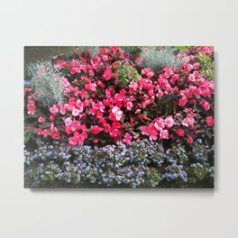 Blossom and bloom Metal Print