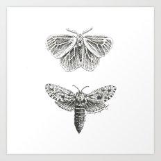 Moth Study Art Print