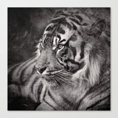 The mysterious eye of the tiger. BN Canvas Print
