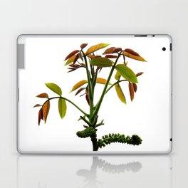 juglans regia Laptop & iPad Skin