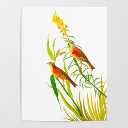 Birds & Yellow Flowers Poster