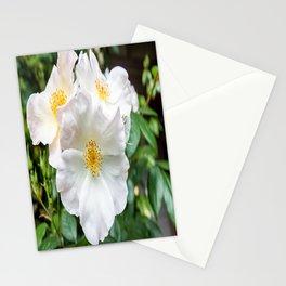 Camellia Bloom Flower Stationery Cards