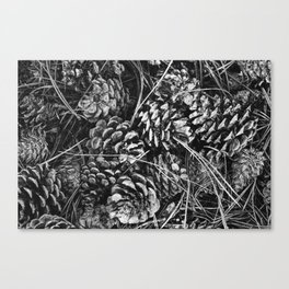 Pine Cone Pileup Canvas Print