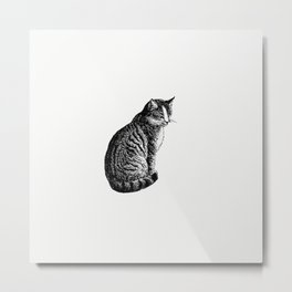 Domestic cat from Aileen Aroon A Memoir Of A Dog With Other Tales Of Faith Friends And Favourites Sk Metal Print