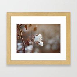 Sweet Cotton Framed Art Print