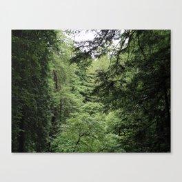 Transparent Forest (crop) Canvas Print
