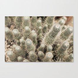 Desert Cactus Garden  | Modern Botanical Photography | Nature Canvas Print