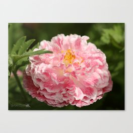 Poppy from the Angel's Choir Mix Canvas Print