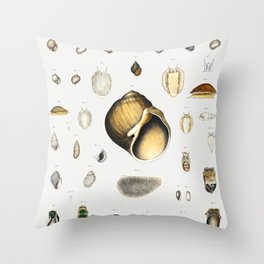 Sea snail varieties set  from Mollusca  Shells by Augustus Addison Gould Throw Pillow