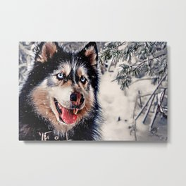 Playful Husky Metal Print