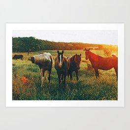 Wild Horses IV Art Print