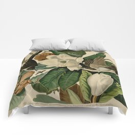 Black-billed Cuckoo Comforters