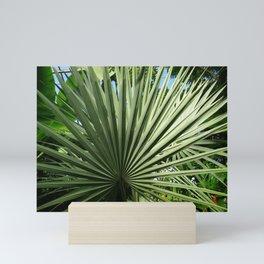 Fan Palm Mini Art Print