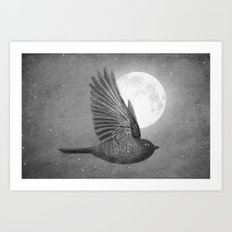 Night Bird Art Print