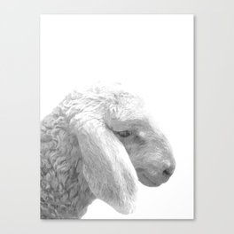 Black and White Sheep Canvas Print