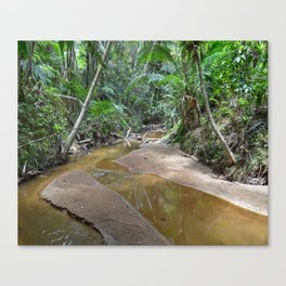 The Holy Spirit deep-forest river explorations in El Yunque rainforest PR Canvas Print