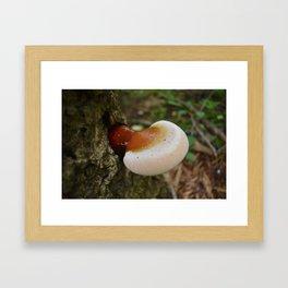 Reishi 3 Framed Art Print