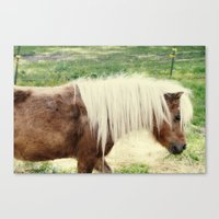 pony Canvas Prints featuring Pony by angela haugland