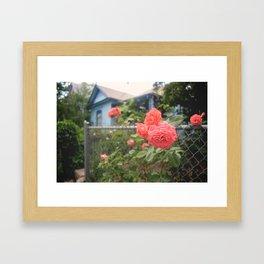 Rosebush Framed Art Print