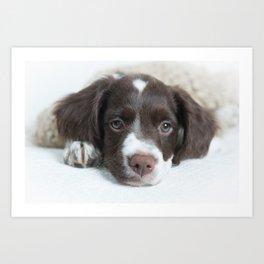 Brittany Puppy Art Print
