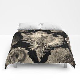 Ernst Haeckel Prosobranchia Sea Shells Comforters