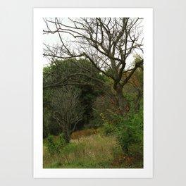 Hazy Forest No.1 Art Print