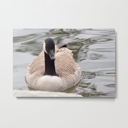 Beautiful Canadian Goose Swimming On Peaceful Pond Metal Print