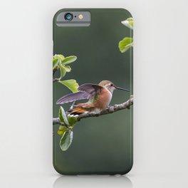 Rufous Hummingbird at Large, No. 2 iPhone Case