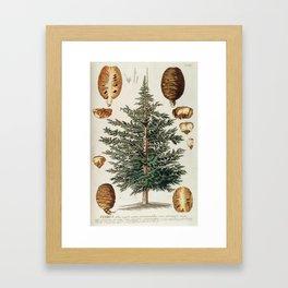 Vintage Cedar Tree illustration Framed Art Print